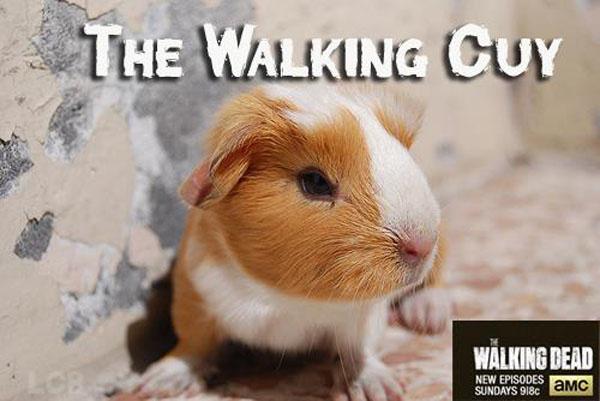 Cuy The Walking Dead
