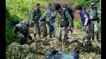 Perú redujo extensión de cultivos de coca a 42.900 hectáreas en 2014 - Noticias de flavio mirella