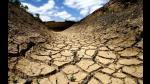 Cambio climático: árboles necesitan 4 años para recuperarse de una sequía - Noticias de la gran familia