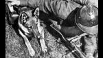 Segunda Guerra Mundial: la URSS y el uso de perros bomba - Noticias de comida alemana