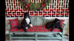Barack Obama: conoce a Bo y Sunny, los famosos perritos de la familia - Noticias de edward kennedy
