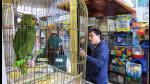 Así es el cruel negocio del tráfico de animales silvestres en Perú - Noticias de oso hormiguero